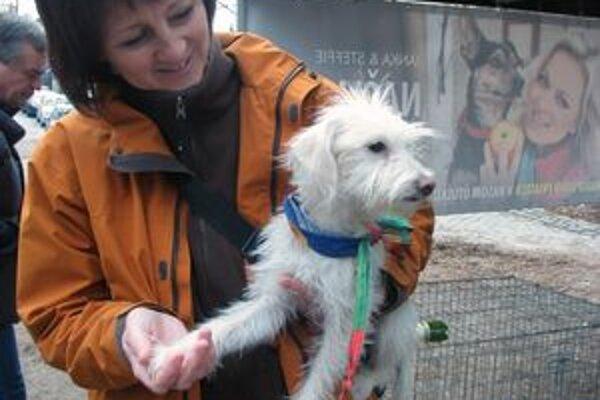 Adopcia psov organizovaná Starým Mestom.