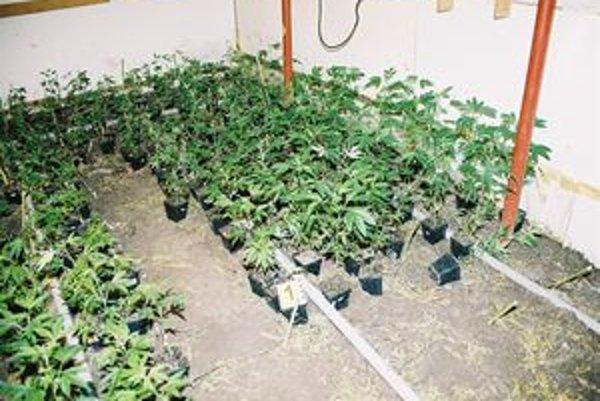 U mladíka našli stovky rastlín a sušené konope.