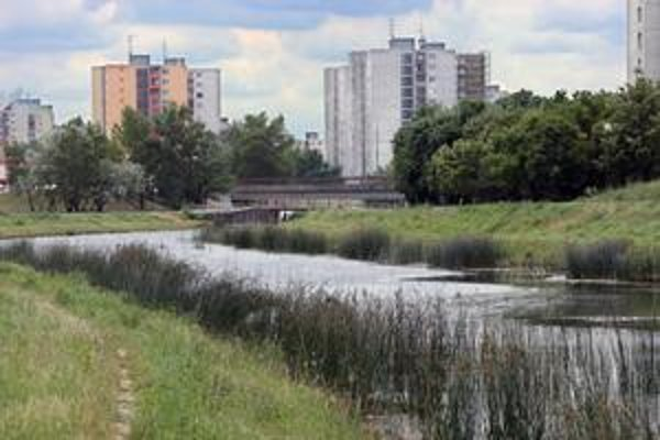 Prečerpávanie vody flóre a faune Chorvátskeho ramena prospieva.Problémom je odpad.