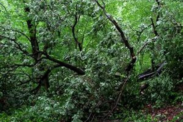 Na veternú smršť a podmočenú pôdu doplatili najmä buky.