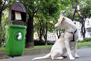 Do konca januára treba zaplatiť daň za psa. Mestské časti z nej financujú opravu košov na psie výkaly.
