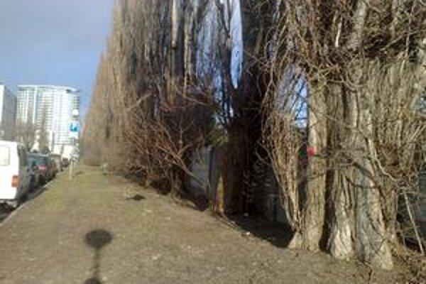 Niektoré stromy v okolí zimného štadióna sú už označené na výrub, rúbať sa má oddnes. Úbytok zelene budú obyvatelia cítiť, náhradná výsadba v tejto lokalite nebude.