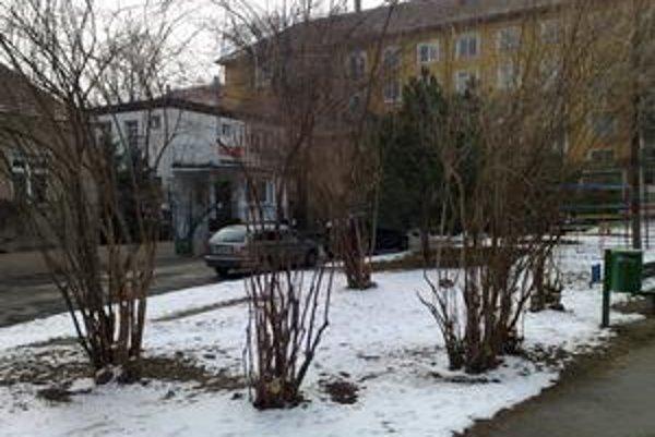 Obyvatelia okolia Tekovskej ulice sa sťažujú na osekávanie zelene, o ktorú sa vo voľnom čase starajú.