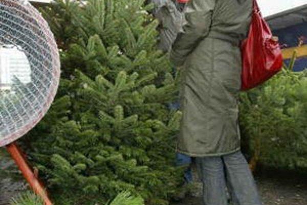 Pred Tescom v centre sa už predaj vianočných stromčekov začal. Meter jedličky tu stojí 700 korún. Predavači hovoria, že strom stačí zalievať a vydrží.