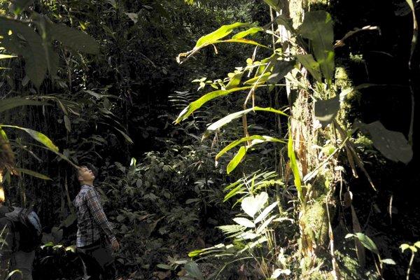 Ekvádorský prales stále ukrýva neznáme druhy.