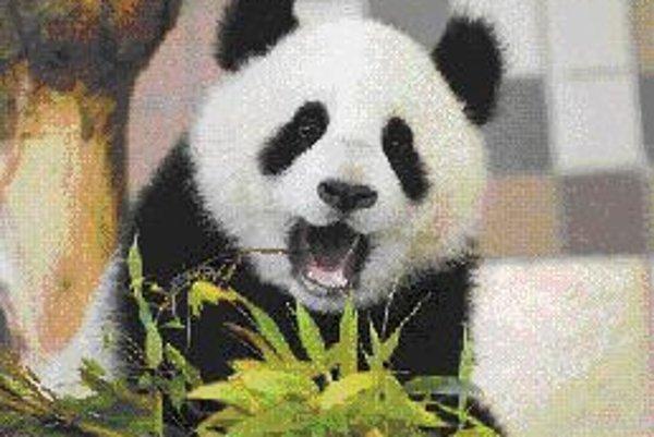 Fu Long oslávi svoj prvý sviatok mrkvovo-bambusovou tortou.