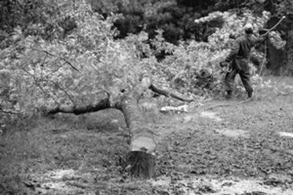 Minulý týždeň vyrúbali z parku zhruba dvanásť stromov. Staré Mesto má ešte vyšetriť, či odstránili len tie, ktoré mali padnúť pri plánovanom budúcom výrube.