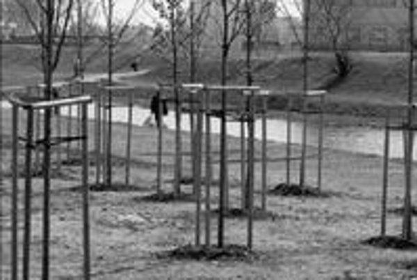 Takmer dvesto stromov vyrúbaných pre stavbu Kauflandu v Petržalke bol staviteľ povinný nahradiť výsadbou 250 stromov. Vysadili ich v novembri minulého roka v blízkosti stavby.