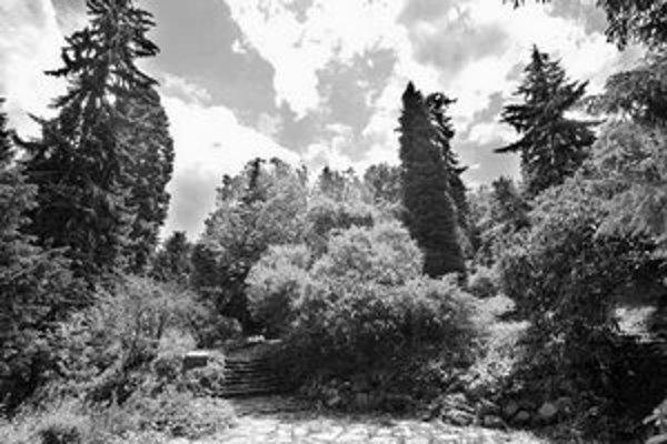 Kochova záhrada patrí k sanatóriu, založili ju ako jeho súčasť. Postupne sa zmenila na vzácnu zbierku drevín.