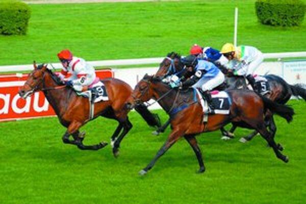 Na starohájsky hipodróm sa vráti vlaňajší rovinový Kôň roku hnedák Ryan (č. 8), ktorý je favoritom Veľkej májovej ceny.