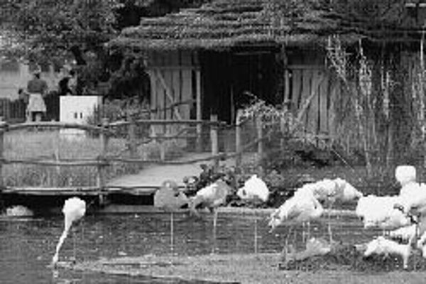 Pražská zoo oslávila 2. augusta Deň otcov. Oteckovia, ktorí prídu s rodinou, majú vstup zadarmo. Vo vzdelávacom centre zoo je zároveň sprístupnená výstava. Dobrodružná nočná prechádzka po zoologickej záhrade zas umožní vidieť, čo robia zvieratá v noci. T