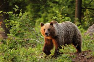 O medveďovi sa ľudia dozvedeli aj z obecného rozhlasu.