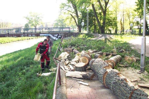 Konáre z topoľa spadli pred týždňom na chodník pri rieke.