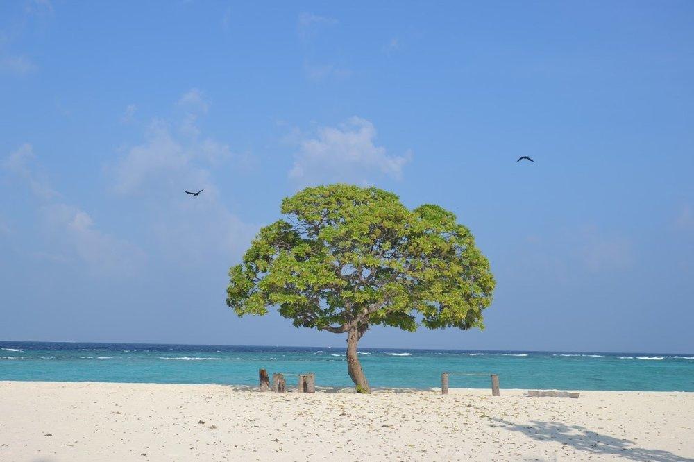Strom uprostred pláže na ostrove Dharavandhoo nám nahrádzal slnečník.