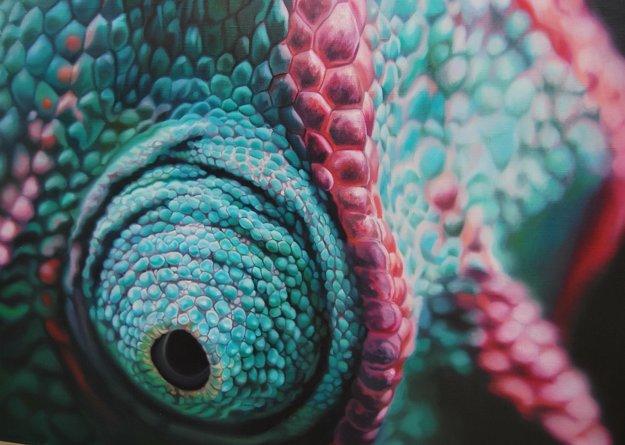 Obraz Ivony Žirkovej Oko chameleóna - olejomaľba.