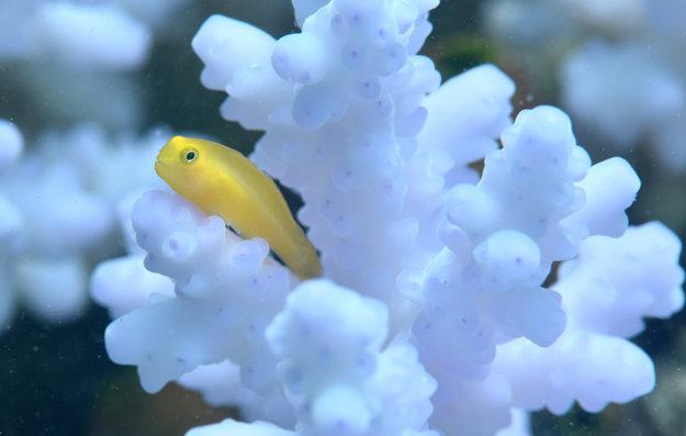 Keď koraly odumrú, mnohé živočíchy stratia svoj domov.