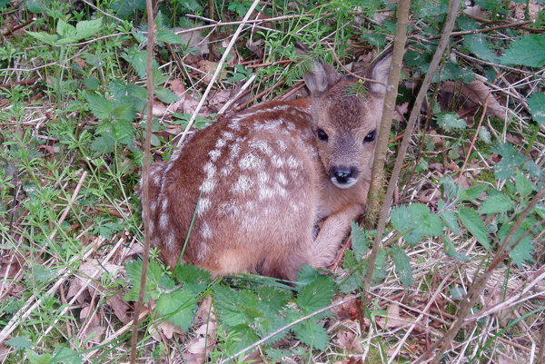V súvislosti so súčasným obdobím kladenia mláďat by návštevníci lesa nemali vyrušovať lesnú zver hlučným správaním, púšťaním psov z vôdzky, jazdou na motocykloch či štvorkolkách.