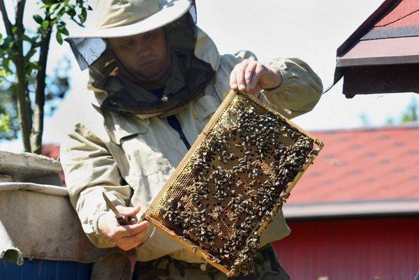 Včeláriť nie je také nebezpečné, ako sa laikom zdá.