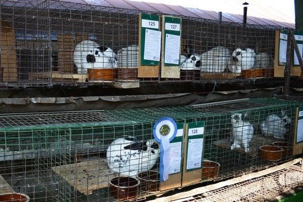 Na výstave bolo približne 450 zvierat.