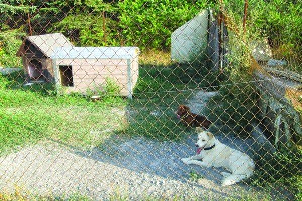 Levický útulok sa stará o opustené zvieratá.