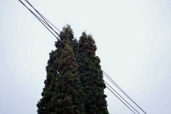 Dreviny, ktoré zasahujú do elektrického vedenia, je potrebné opíliť.