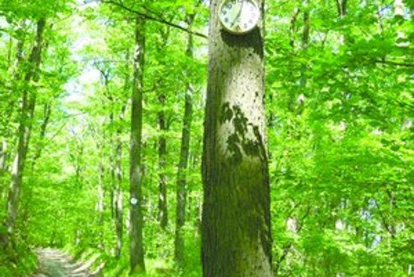 Cestu k jabloňovským vinohradom lemujú stromy s kuchynskými hodinami.
