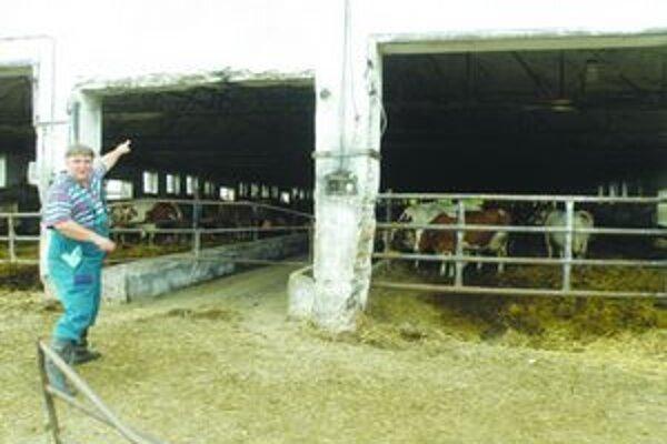 Zootechnik Attila Czuczor ukazuje, odkiaľ zlodeji vzali kravu.