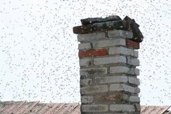 Rodine Greksovcov z Hornej Seči sa usadili na dome včely.