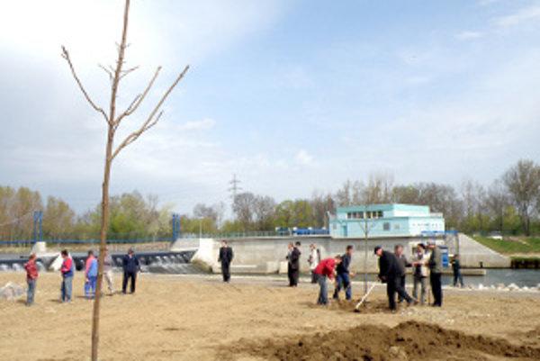 Rozbúrený Hron v roku 2009 odniesol stovky kubíkov zeminy aj s takmer 400-ročnými dubmi. Na ich mieste teraz vysadili nové stromy.