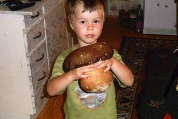 Kráľa húb našiel štvorročný Matúško Hajnovič v lesoch nad Jabloňovcami. Vážil takmer kilogram.