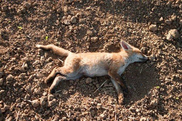 Otrávená líška.