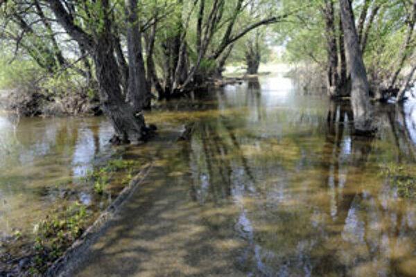 Zaplavené lesy v povodí Moravy.