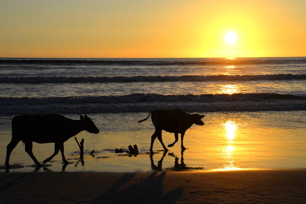 """Sumatra a západ slnka na pláži na okraji """"nekonečnej"""" džungle."""