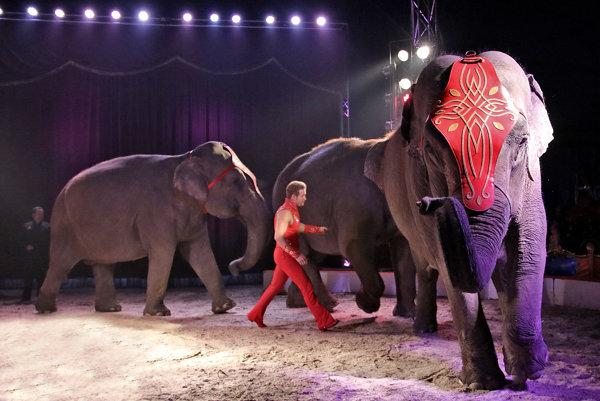 V našom zverinci máme indické slony, ktoré v manéži predvádza Elvis Errani - mnohonásobný laureát najprestížnejšieho cirkusového festivalu sveta Monte-Carlo.