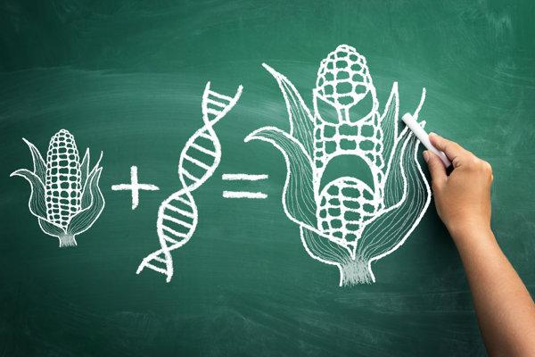 Sú GMO potraviny skutočne také nebezpečné?