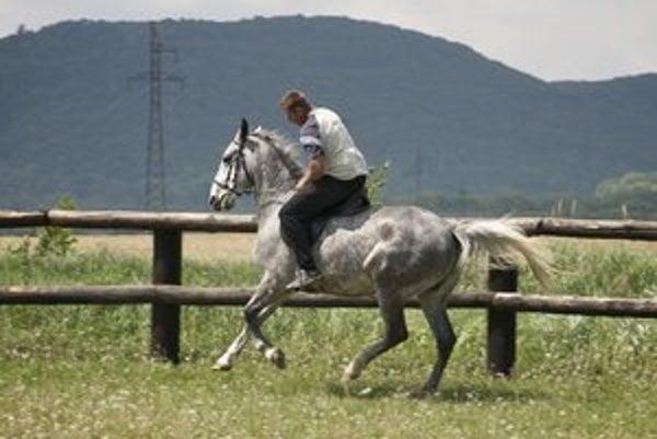 Na farme sú lákadlom najmä kone.