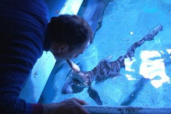 Fabrice Lesieur žraloky kŕmi z ruky.
