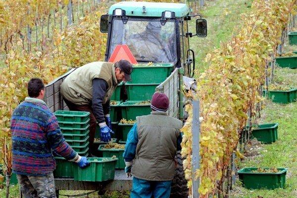 Zamestnať Slovákov na pôde sa nevyplatí, miesta preto dostávajú cudzinci