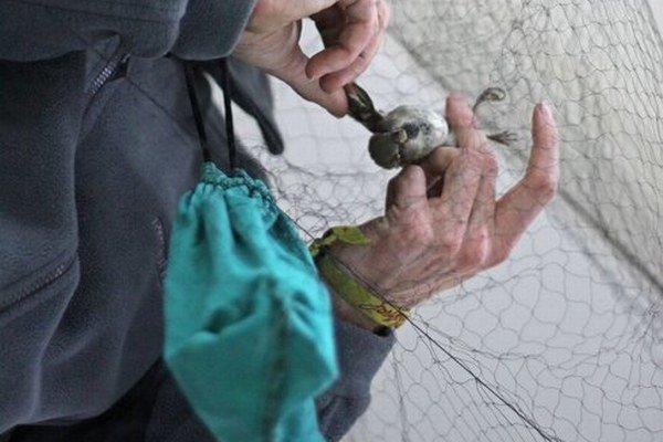 Vrabce v predajni chytajú do siete