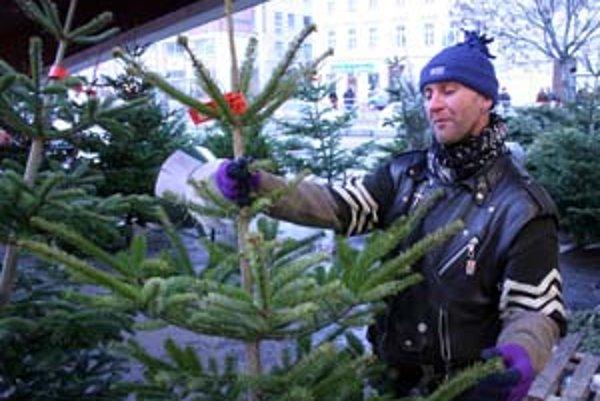 Obchodníci tvrdia, že ceny živých vianočných stromčekov dopestovaných na Slovensku, nebudú v porovnaní s minulým rokom zvyšovať. Ceny sa budú pohybovať od dvesto korún za meter. Vo väčších mestách budú drahšie.