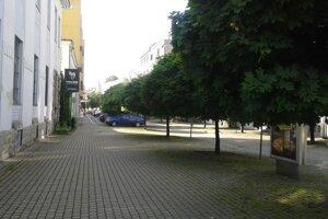 Stromy na Ulici republiky.