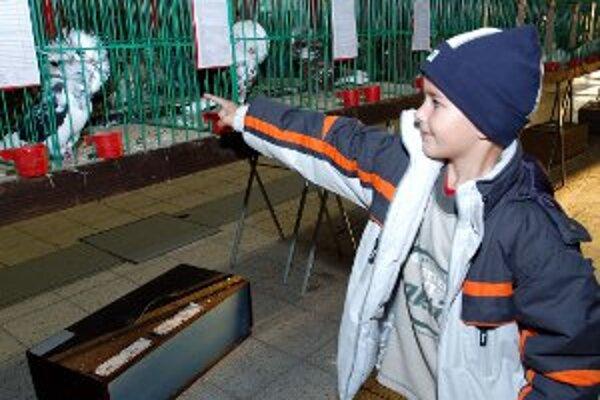 Chovatelia králikov, hydiny a holubov sa 6. októbra stretnú na výstave v Nitrianskom Rudne.