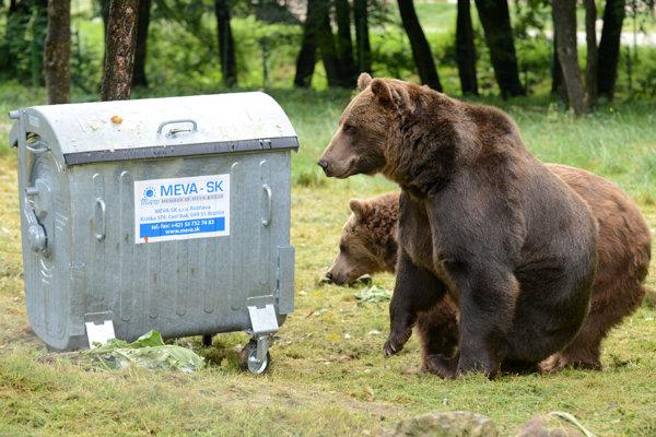 Medvede sa niekedy vyberú bližšie k ľuďom