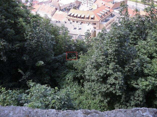 Pod vyznačeným miestom sa skrýva svietidlo, ktoré je kvôli korunám náletov vypnuté.