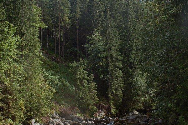 Javorová dolina.