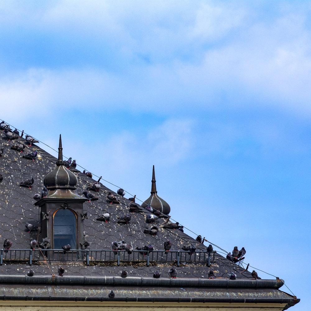Dům holubí - z tešínskych striech
