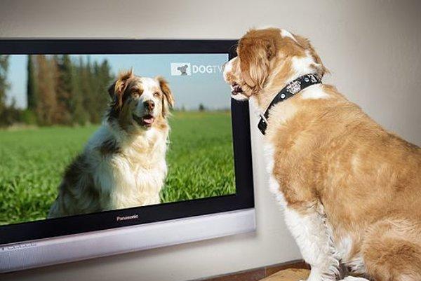 Aj psy si vyberajú, čo budú v televízii pozerať a čo nie.
