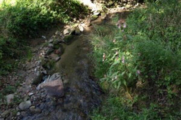 Brehy potoka takmer nevidno cez hustý porat a popadané kamene.