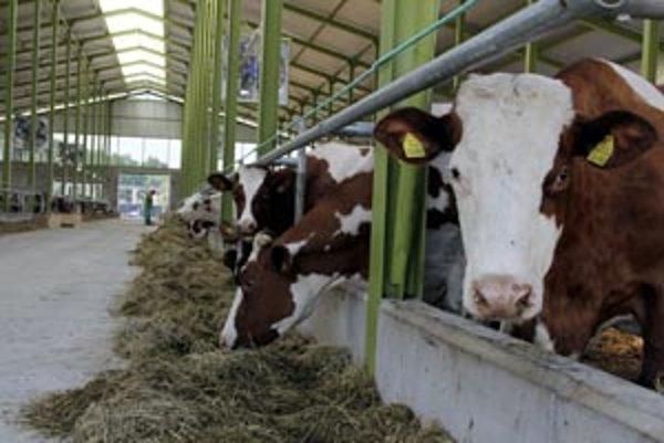 V Koši otvorili novú modernú farmu dojníc.