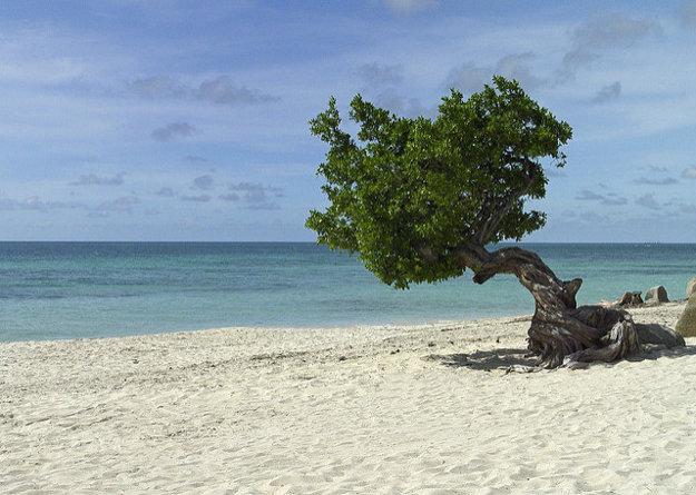 Ostrov Aruba je klenotom južného Karibiku.